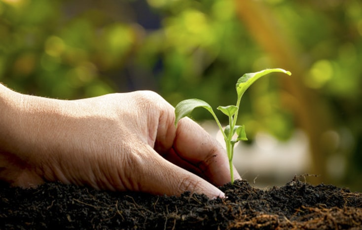 Un fonds d'entrepreneurs aux côtés d'une startup spécialisée dans les investissements forestiers